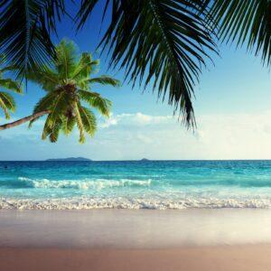DOCO – Island Beat